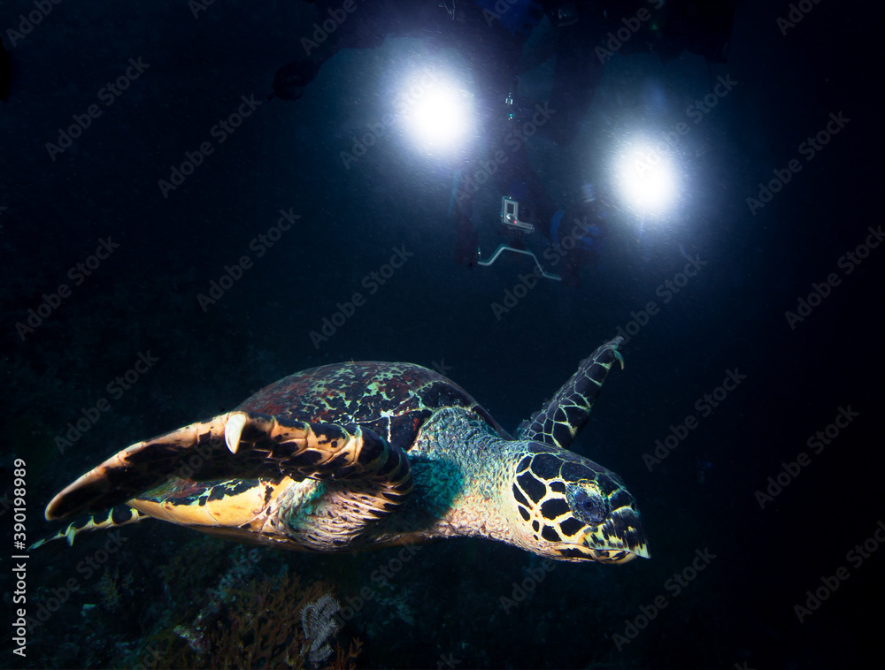 Fototapeta Turtle and underwater camera with lights.