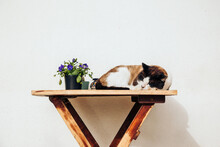 Cat Sleeping On A Wooden Table