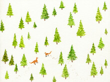 Green Firs And Lovely Foxes In Winter Forest
