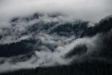 Fog In Trees On The BC Coast