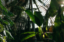 Tropical Greenhouse.