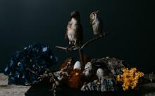 Birds With Their Nests Still L...