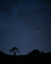 A Lone Tree Against The Night Sky