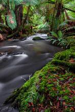 Tasmanian Wilderness Rainfores...