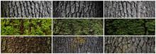 Set Of Tree Bark Textures. Tru...