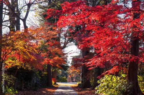 Tela 興禅寺 参道の紅葉