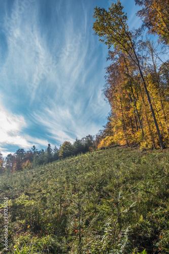Fototapety, obrazy: Wiederaufforstung von Jungbäumen im Mischwald