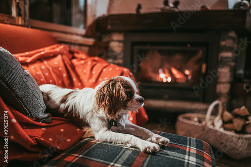 Cute Little Puppy Resting By The Fireplace at Home Canvas Print