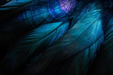 Stylish dark feather texture background