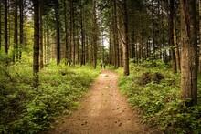 Path In The Woods Road Trekking