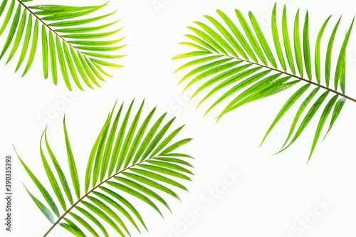 Fotografering leaves of palm isolated on white background for design elements, tropical leaf,