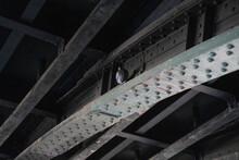 Low Angle Igeon On Steel Girde...