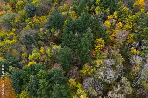 forêt en vue aérienne dans le Morvan Canvas Print