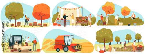 Fototapeta People gathering crops or seasonal harvest in garden, farmers in autumn, set of vector illustrations. Farmer market. Men and women farming, collecting ripe fruits, berries and vegetables. obraz