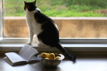 Bowl Of Lemons And Open Book O...