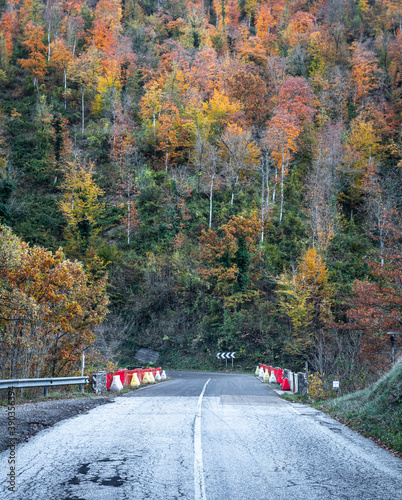 Fall Foliage into Foreste Casentinesi, Italy