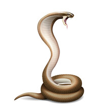 Hissing Snake Realistic Composition