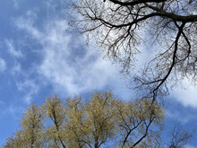 Treetops Against The Blue Sky. Nature Background
