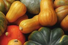 Many Multicolor Pumpkins, Autu...