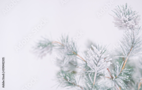 Fototapety, obrazy: silver light Christmas snow-covered background. Space for the test
