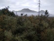 Mt Rainier And Trees