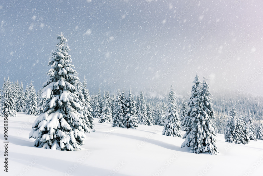 Fototapeta Fantastic winter landscape with snowy trees. Carpathian mountains, Ukraine, Europe. Christmas holiday background. Landscape photography