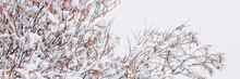 Snow On The Branches Of Trees ...