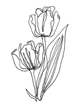 Hand Drawn Tulips