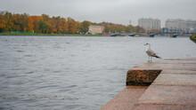 Autumn River Neva