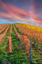 Struempfelbach - Vineyards At ...