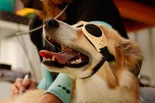Perro Con Gafas En Terapia De ...