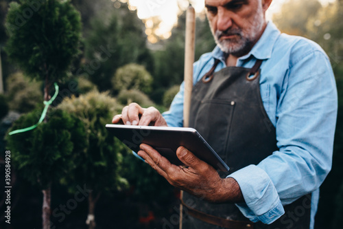 Fotografie, Tablou middle aged gardener working with tablet in tree nursery