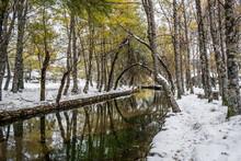 Covão D'Ametade Reflections In The Zêzere River In The Glacier Valley Of Birch Trees, Snowy Landscape - Serra Da Estrela Natural Park, Mateigas PORTUGAL