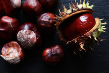 Fresh Conkers In And Out Their...