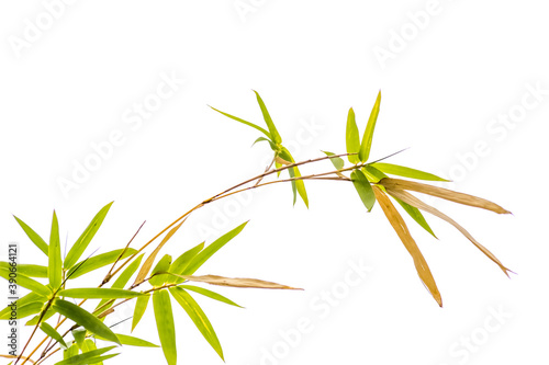 Tela bamboo isolated on white