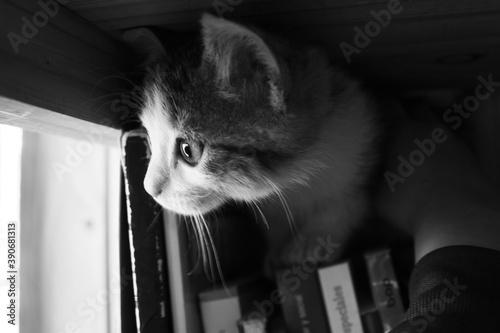 gato Tapéta, Fotótapéta