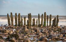 Wooden Groynes On Dunster Beach