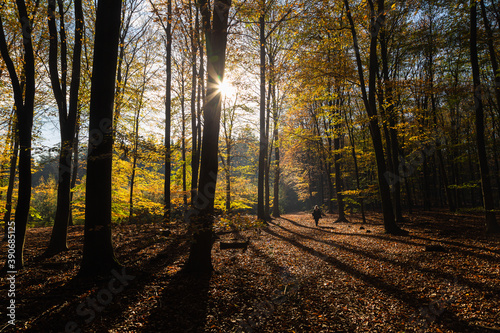 Valokuva Primeval Dutch forest on a sunny day in November in extreme colorful autumn outfit