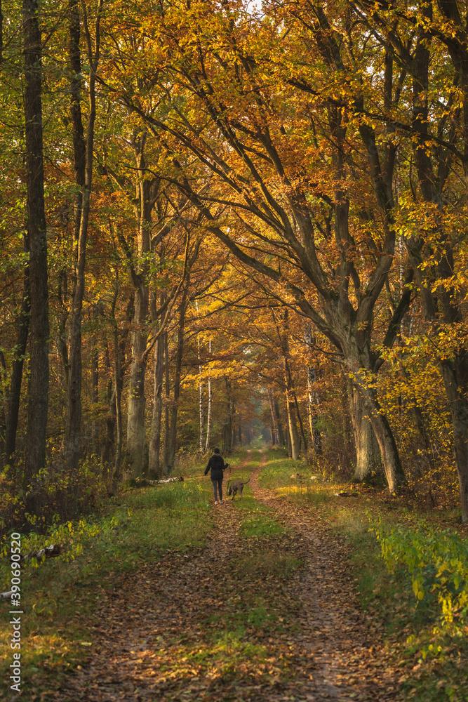 Fototapeta Złota Polska jesień w lesie