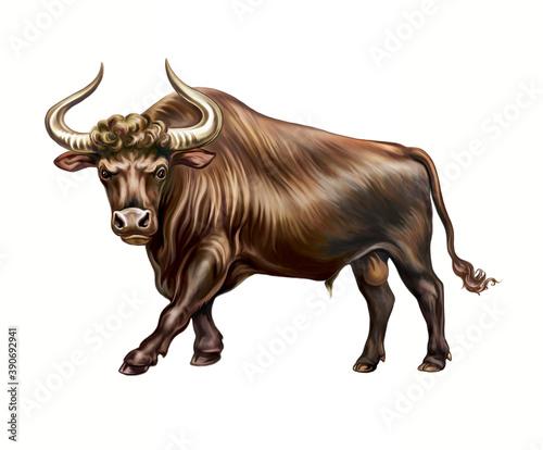 Fényképezés The aurochs or rarely aurochsen, urus or ure (Bos taurus primigenius)