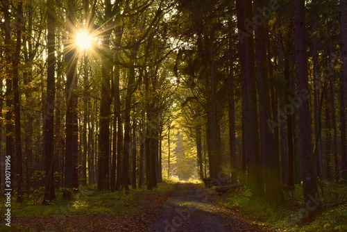 Fototapety, obrazy: Las jesienią