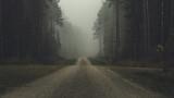 Tajemnicza leśna droga we mgle.