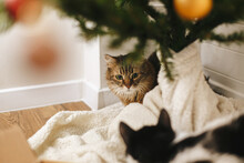 Adorable Two Cats Sitting Under Christmas Tree On Soft Blanket With Red And Gold Baubles