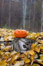 Halloween Pumpkin Head In Autumn Forest Among Yellow Leaves On The Daytime