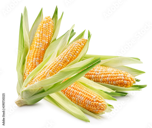 corn ears isolated on a white background Fotobehang