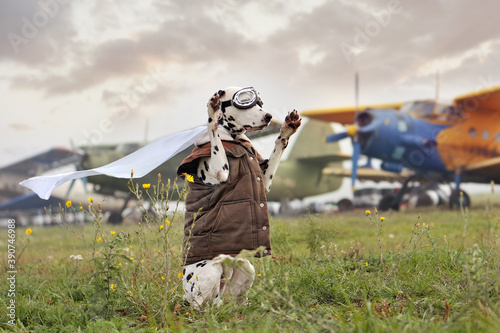 Photo Dog wearing pilot goggles sitting on hind legs