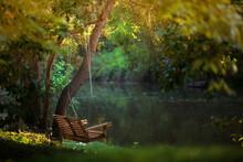 Tree Swing Overlooking Creek