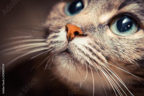 close up cats face © оксана савоськина