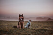 Parson Russell Terrier and Bohemian Shepherd Autumn Portrait