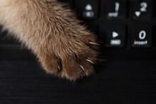 Scratching Cat Paw On Keyboard...
